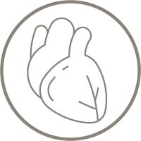 supports healthy blood flow icon